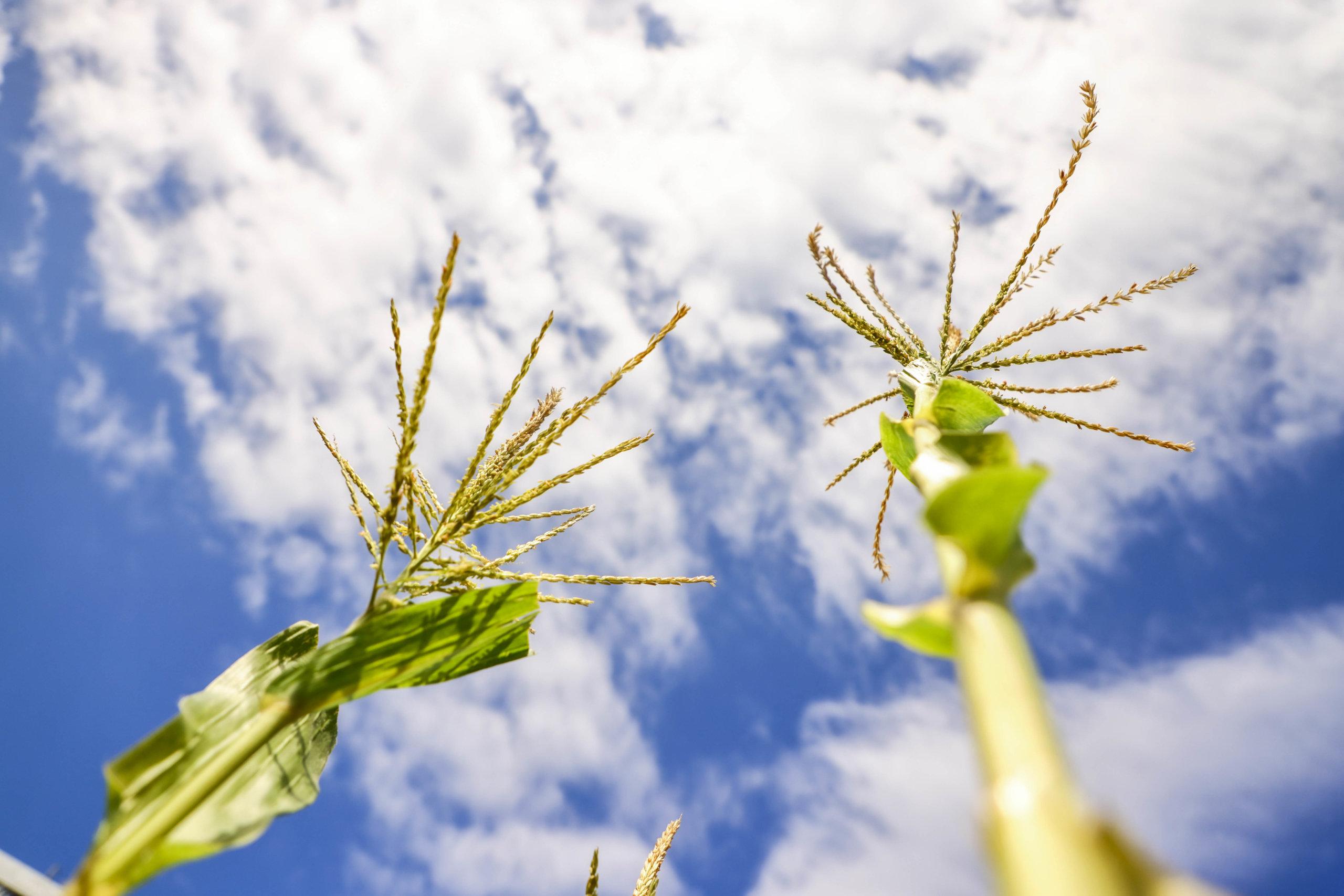 可以在九龍區鬧市中種植物,感覺好治癒。
