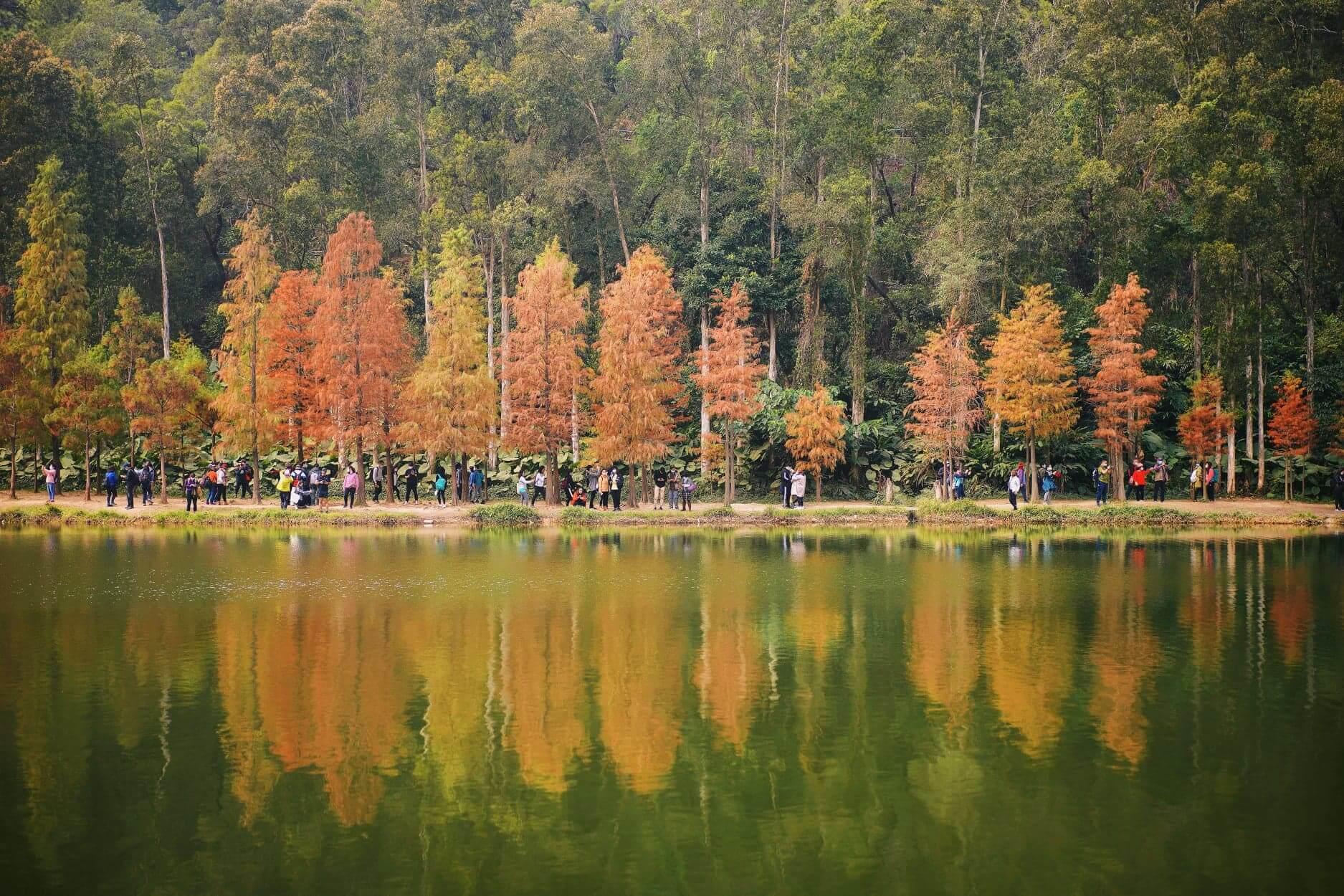 落羽松加上港版「天空之鏡」的流水響水塘,景色非常浪漫。