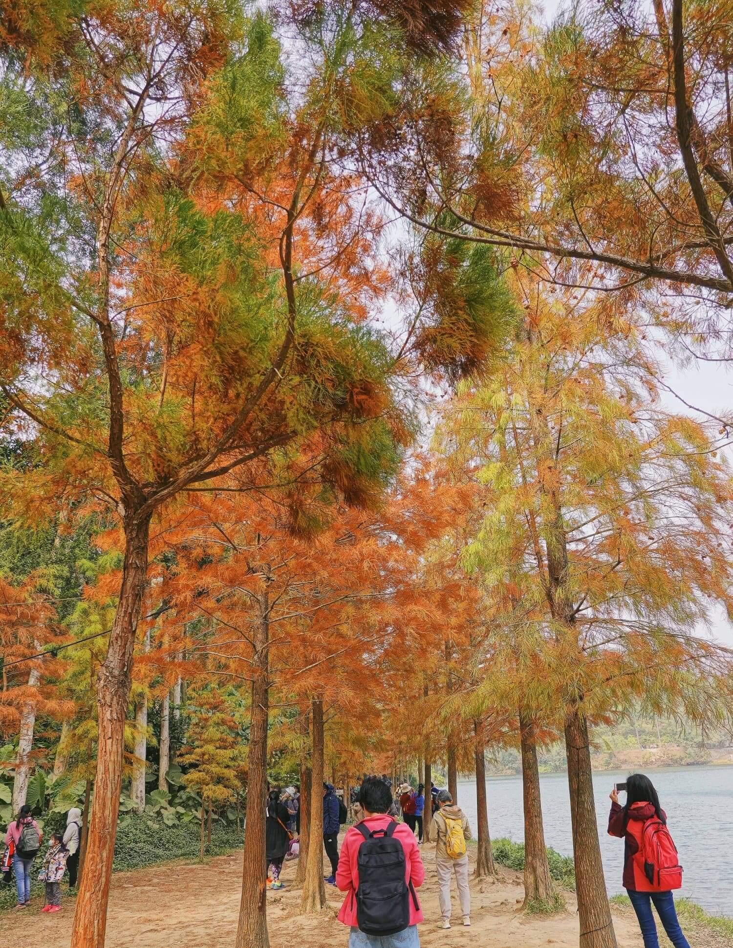 兩排楓紅的並木,令人聯想起南恰島。