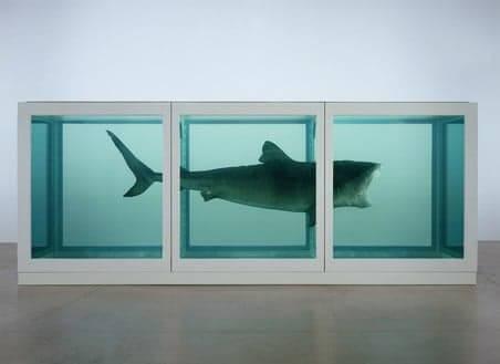 將一條14英尺長嘅鼬鯊放喺裝滿甲醛嘅玻璃櫃裏。