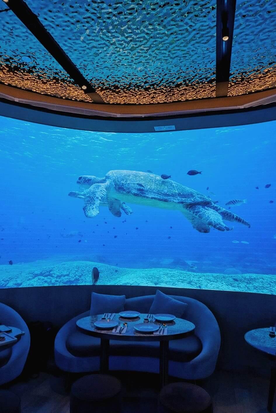 海龜暢泳,令人精神放鬆。