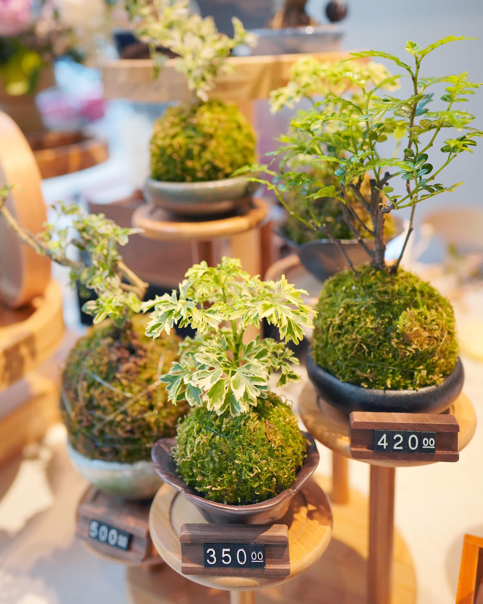 店子賣各式各樣盆栽植物,當中唔少品種都幾少見。