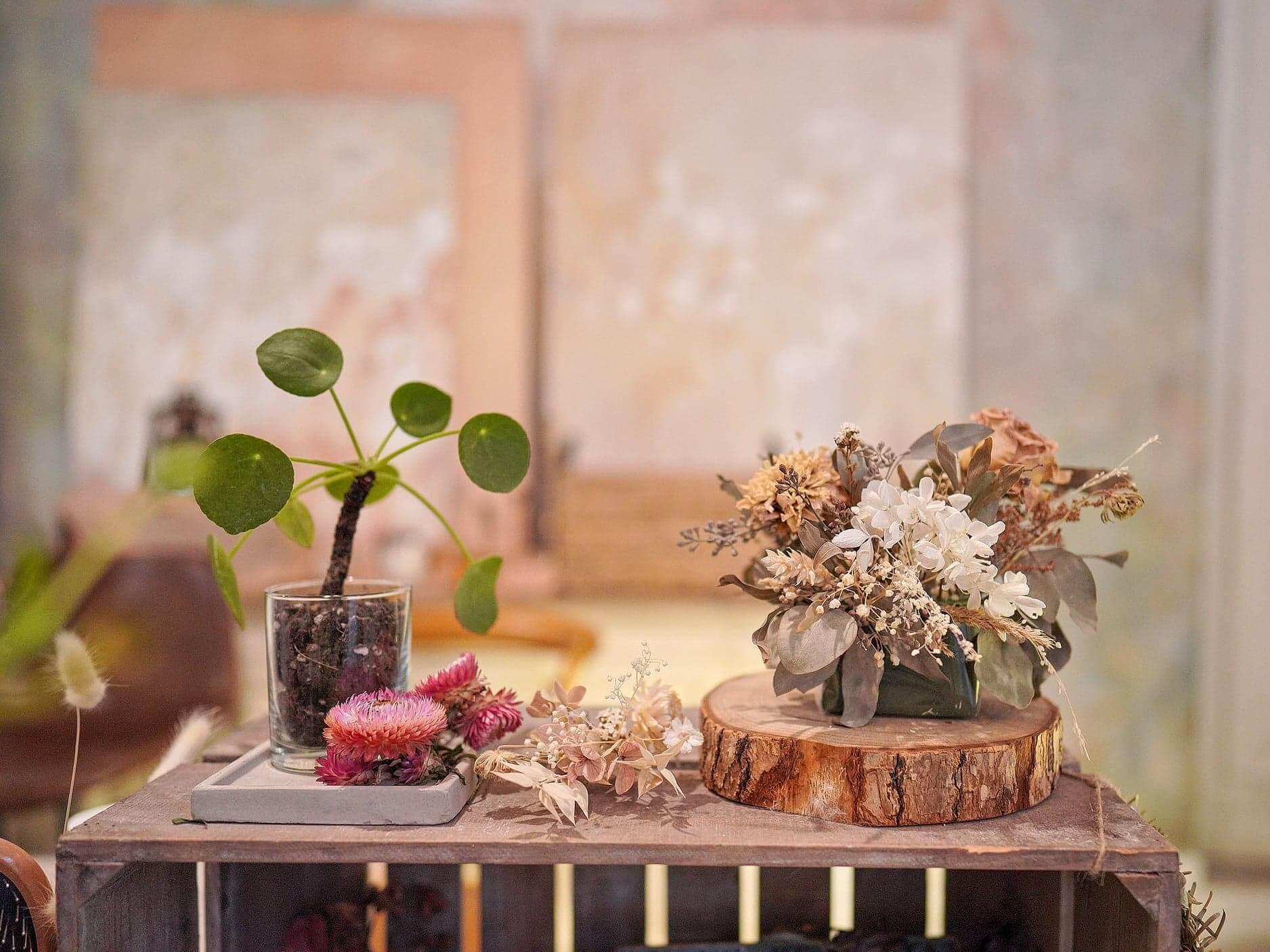 店內有售大量特色盆栽。